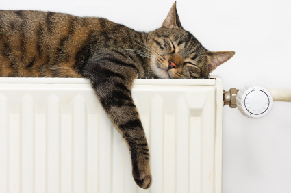 An image of a cat sleeping on a radiator